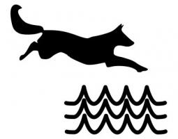 Jak psa naučit plavat?