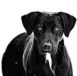 Petr Paloušek - výchova a výcvik psů